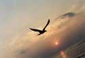 FLying фотография